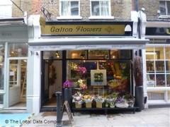 Galton Flowers image