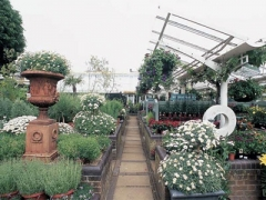 Clifton Nurseries image