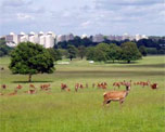 Richmond Park image