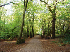 Highgate Wood image
