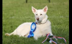 Battersea Dogs and Cats Home Annual Reunion Fun Day image