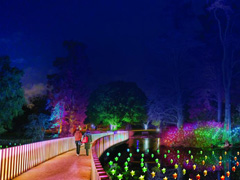 Christmas at Kew image