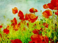 Spring Concert – The Armed Man – A Mass for Peace by Karl Jenkins image