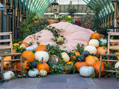 Europe's Largest Pumpkin Comes To Covent Garden image