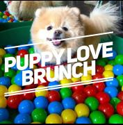 Puppy Brunch - Dog Friendly Screenings + Bottomless  Brunch image