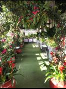 The Boisdale Canary Wharf Flower Show - One Love Jamaica Garden image