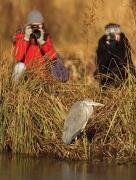 Wildlife Photography: intermediate skills image