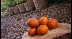Halloween Pumpkin Festival at Osterley Park and House image