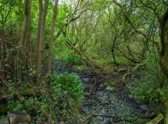 Member's Walk: Coppicing and Pollards image