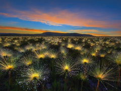 International Garden Photographer of the Year image