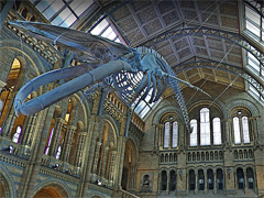 Virtual Natural History Museum image