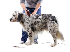Pets Grooming Services image