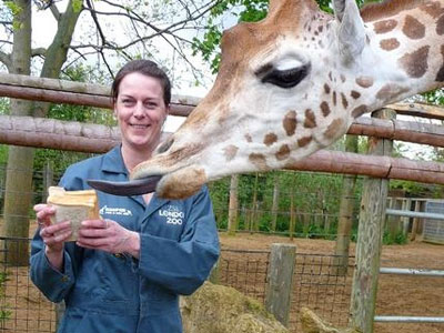 Be a zookeeper for a day image