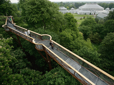 Take a treetop walk picture