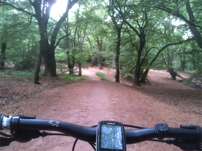 Mountain Biking in Epping Forest image