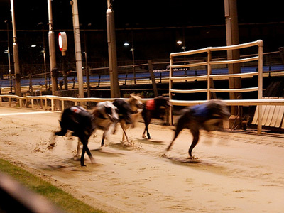 Dog racing image