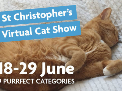 St Christopher's Virtual Cat Show image