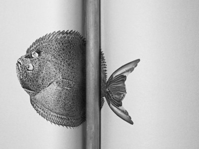 Savinder Bual - Ananas and the Flatfish image