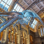 Natural History Museum now open! picture