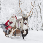Win a festive call from Lapland picture